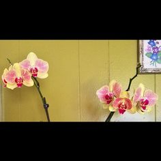 Final shot of my orchid for this year's blooming season. All 7 buds have bloomed. Just so thrilled! I wonder if I'll get blooms again next y... Copyright © 2014 Tofu Fairy's Brain Pile - All Rights Reserved