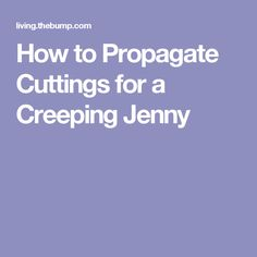 How to Propagate Cuttings for a Creeping Jenny