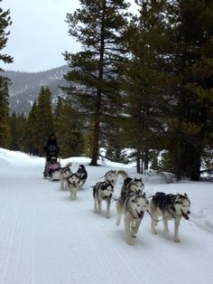 Dog Sledding With Good Times Adventures In Breckenridge, Colorado