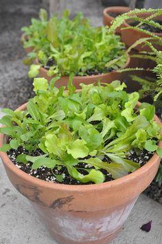 Garden Edibles: Success Secrets, GardenDesign.com