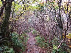 Craggy Gardens Trail,between Asheville & Banner Elk, is an easy to moderate hike.It has some of the most beautiful views of the Blue Ridge Mtns.There are also facilities at this hiking trail beginning.