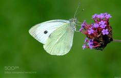 Butterfly by XavierTesse via http://ift.tt/2hgTBSi