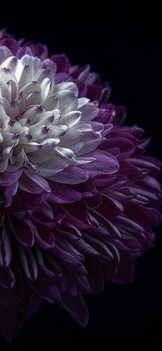 Flowers Purple Wallpaper Phone Wallpapers 64 Ideas For 2019 Purple Wallpaper Phone, Flower Wallpaper, Iphone Wallpaper, Wallpaper Plants, Amazing Flowers, Floral Flowers, Beautiful Flowers, Beautiful Candles, All Things Purple