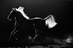 Freedom in Black and White - Melis Yalvac Photographer