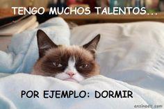 memes gato gruñon en http://ansinaes.com
