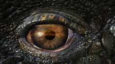 Real Dragons Eye | HD 3D and Abstract Wallpapers for Mobile and ...