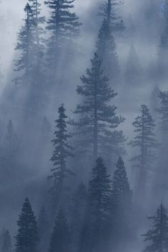 Pine tree forest photography mists 68 ideas for 2019 Foggy Forest, Dark Forest, Misty Forest, Forest Photography, Landscape Photography, Dame Nature, Pine Trees Forest, Desenho Tattoo, Belle Photo