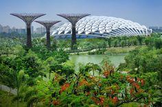 Zahrady v zálivu. Památník v Singapuru