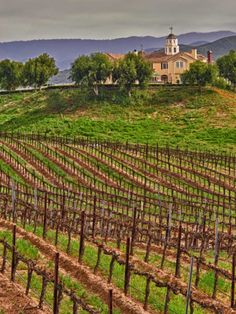 Leoness Cellars, Temecula, Riverside, California by Richard Duval