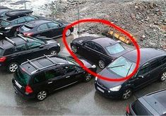 These 10 People Learned The Hard Way That They Need To Stop Parking Like Jerks If you park like a jerk this might happen to you. Bad Parking, Most Viral Videos, What Is Coming, Road Rage, Passive Aggressive, The Hard Way, What Happens When You, Funny Photos, Fun Facts