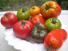 la taille des plants de tomates