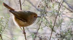 Alarming discovery. Birds scare predators with false alarm.