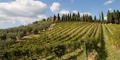 A Tuscan Vineyard in Italy