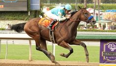 www.horsealot.com, the equestrian social network for riders & horse lovers | Horseracing : American Pharoah.