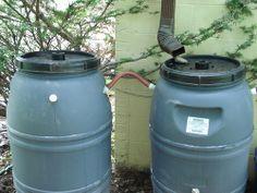 rain barrel basics 101: Prep, Placement, Pests