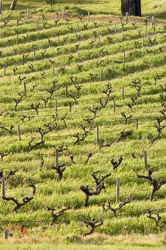 Bethany Schrapel Family Vineyards : Bethany Wines