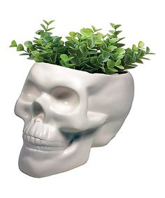 Look what I found on #zulily! White Skull Planter by Streamline #zulilyfinds