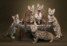les plus beaux chats du monde                                                                                                                                                                                 Plus