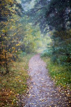 I have dreams about a path like this. Wonder what it means?