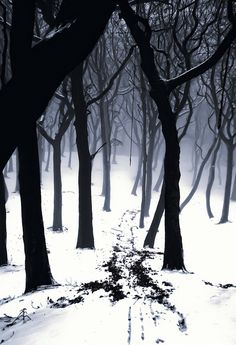 Something wicked this way comes... #forest #trees #snow #winter #goth #gothic #Halloween #spooky #eerie