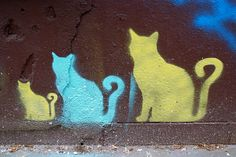 les chats qui grandissent