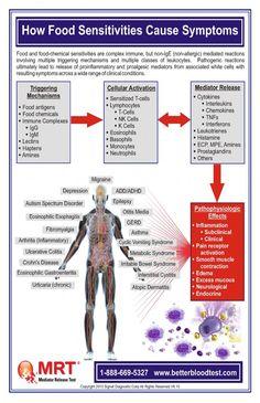 Mediator Release Testing (MRT) FAQ How Food Sensitivities Cause Illness