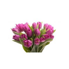 Purple Tulip Bouquet ($60) ❤ liked on Polyvore featuring home, home decor, floral decor, purple home decor, tulip bouquet, purple bouquets and purple home accessories