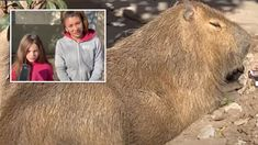 Neighbourhood's fight to help little girl keep her giant pet rodent