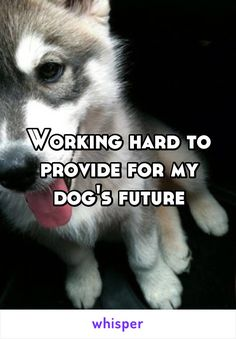 Working hard to provide for my dog's future
