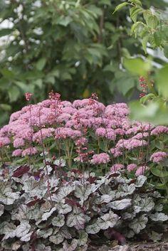 Kärleksört - lika fin i rabatten som i höstkrukan Garden Gadgets, Beautiful Gardens, Pink Garden, Autumn Garden, Nature Garden, Cottage Garden, Plants, Outdoor Plants, Garden Inspiration
