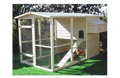 Bucket List - Raise chickens