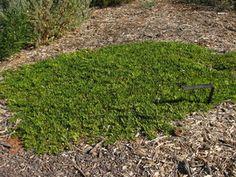 Australian native plant nursery — Australian Outback Plants - Native Plant Nursery - USA