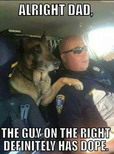 German Shepherd Tierischer Humor, Cops Humor, Police Humor, Police Dogs, Funny Police, Cop Dog, Police Quotes, Police Officer, Funny Animal Memes