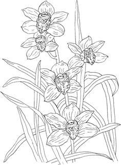 Orquídea Cymbidium Rosanna  Dibujo para colorear