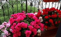 Organic Gardening For Dummies Refferal: 7203094553 Outdoor Plants, Potted Plants, Gardening For Dummies, Front Gardens, Garden Junk, Garden Boxes, Cactus Y Suculentas, Gardening Gloves, Topiary
