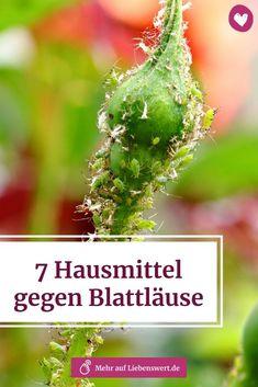 Blattläuse können deiner Pflanze einen erheblichen Schaden zufügen. Wie du die lästigen Schädlinge ganz ohne Chemie bekämpfen kannst, verraten wir dir hier. #blattläuse #pflanzenschädling #zimmerpflanzen #garten #hausmittel #pflanzen #schädlinge