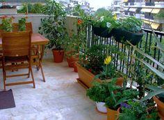 ACT FREE ☀: Τα καταλληλότερα φυτά για μπαλκόνια & βεράντες