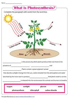Photosynthesis Worksheet Weather – Creative Dress Of College Game Day Biology Lessons, Science Lessons, Science Education, Life Science, Physical Science, Earth Science, Science Experiments, Photosynthesis Activities, Science Worksheets