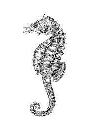 seahorse - Google Search
