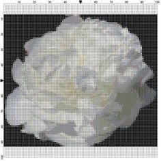 Cross Stitch Pattern White Peony Flower by theelegantstitchery, $15.00