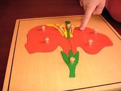 Montessori Mar del Sur: El puzzle de la flor, hoja y árbol