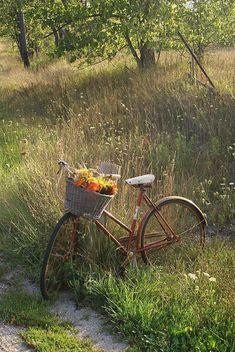 Country Living ~ take a bike ride with nature. Spring Aesthetic, Nature Aesthetic, Aesthetic Green, Aesthetic Gif, Aesthetic Vintage, Aesthetic Fashion, Fairytale Garden, Fairytale Cottage, Cottage In The Woods