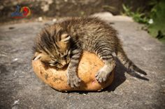 I just love this potato  it's mine