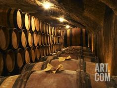 Wooden Barrels with Aging Wine in Cellar, Domaine E Guigal, Ampuis, Cote Rotie, Rhone, France Photographic Print by Per Karlsson at Art.com