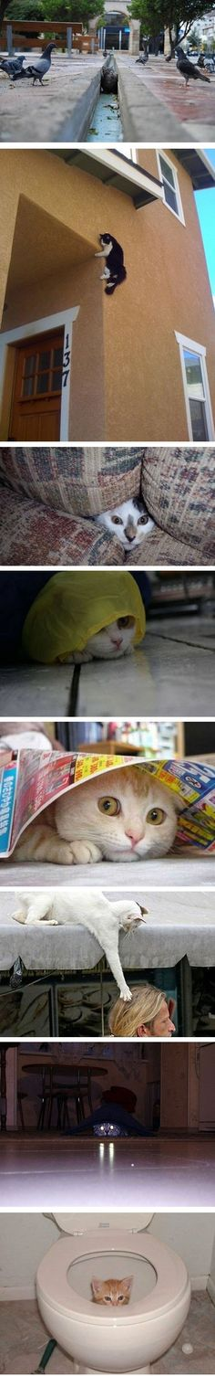Funny pictures about Ambush experts. Oh, and cool pics about Ambush experts. Also, Ambush experts photos. Animals And Pets, Funny Animals, Cute Animals, Crazy Cat Lady, Crazy Cats, I Love Cats, Cute Cats, Silly Cats, Ninja Cats