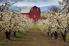 photo of spring barn - Bing Images