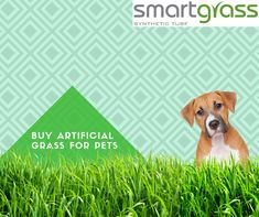 Artificial Grass for Pets, Fake & Synthetic Grass for Dogs, Artificial Turf for Dogs - Smart Grass USA Fake Grass For Dogs, Artificial Grass For Dogs, Artificial Turf, Newport Beach, Touch, Usa, Pets, Animals, Astroturf