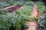 5 Tips for Growing Vegetables in Your Garden