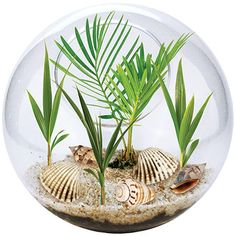 Live under the sea with this beachscape terrarium. | 25 Gifts For People Obsessed With The Ocean