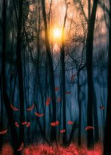 Red Feather Dance Art Print by Viviana Gonzalez Canvas Artwork, Cool Artwork, Canvas Prints, Art Prints, Forest Art, Dark Forest, Red Feather, Print Artist, Art Google